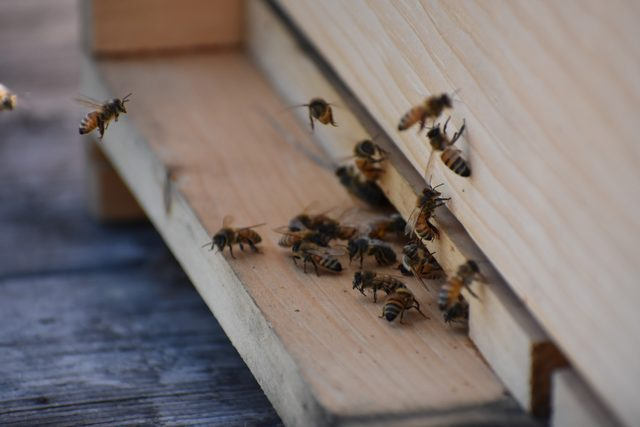 Chickens and Honeybees Can Coexist!