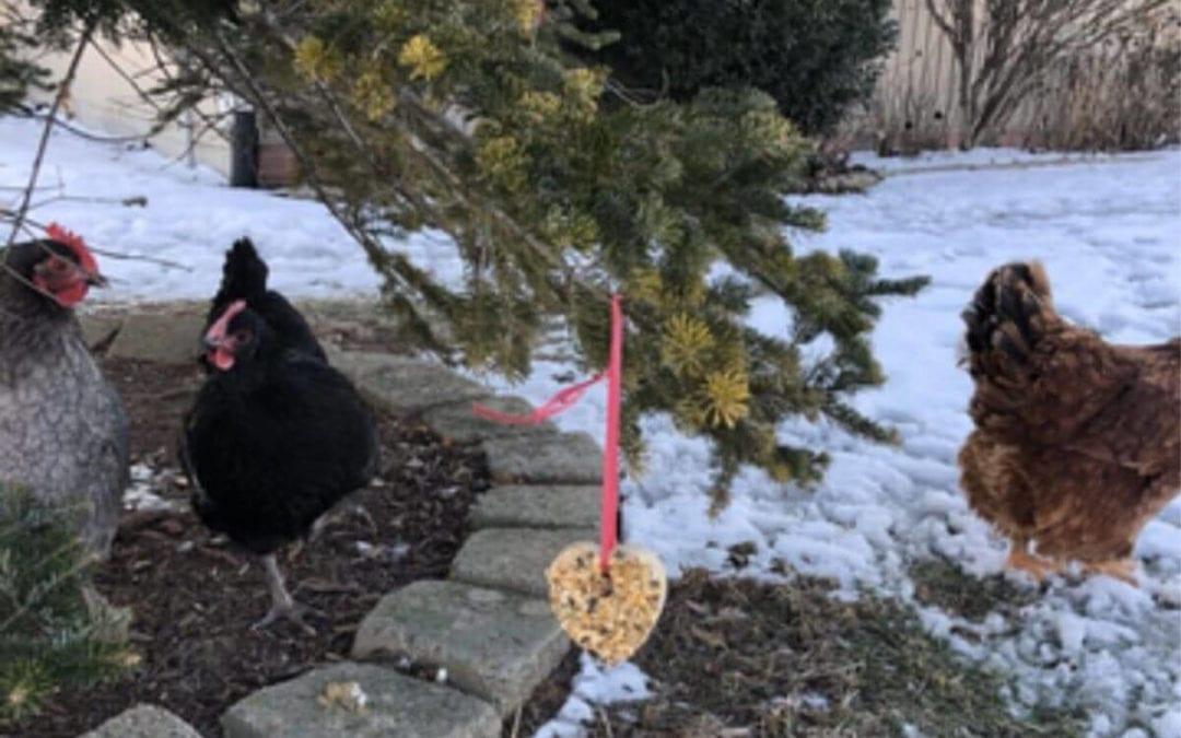 Heart Shaped Valentine's Day Chicken Treats