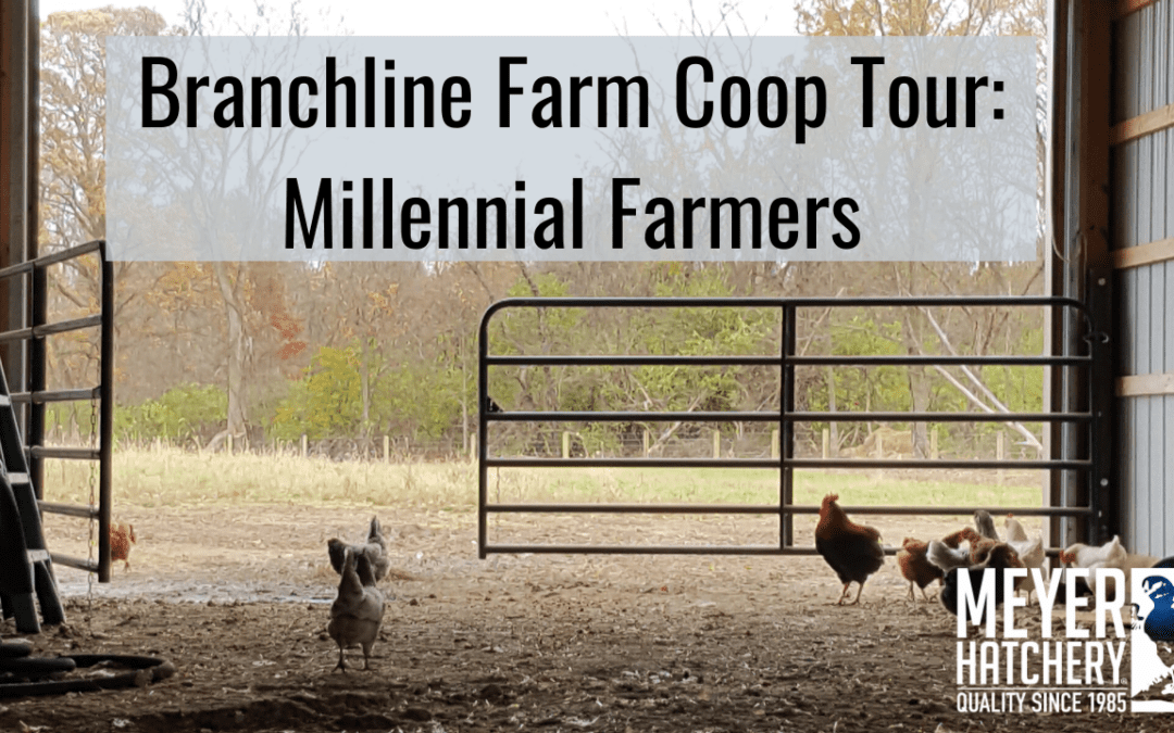 Branchline Farms Coop Tour
