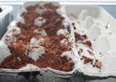 Seed Starting In An Egg Carton