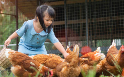 Top Breed Picks for a Family Friendly Flock