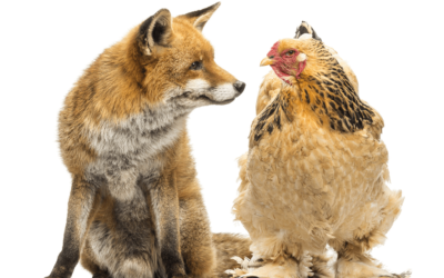Identifying Predators and Protecting Your Poultry