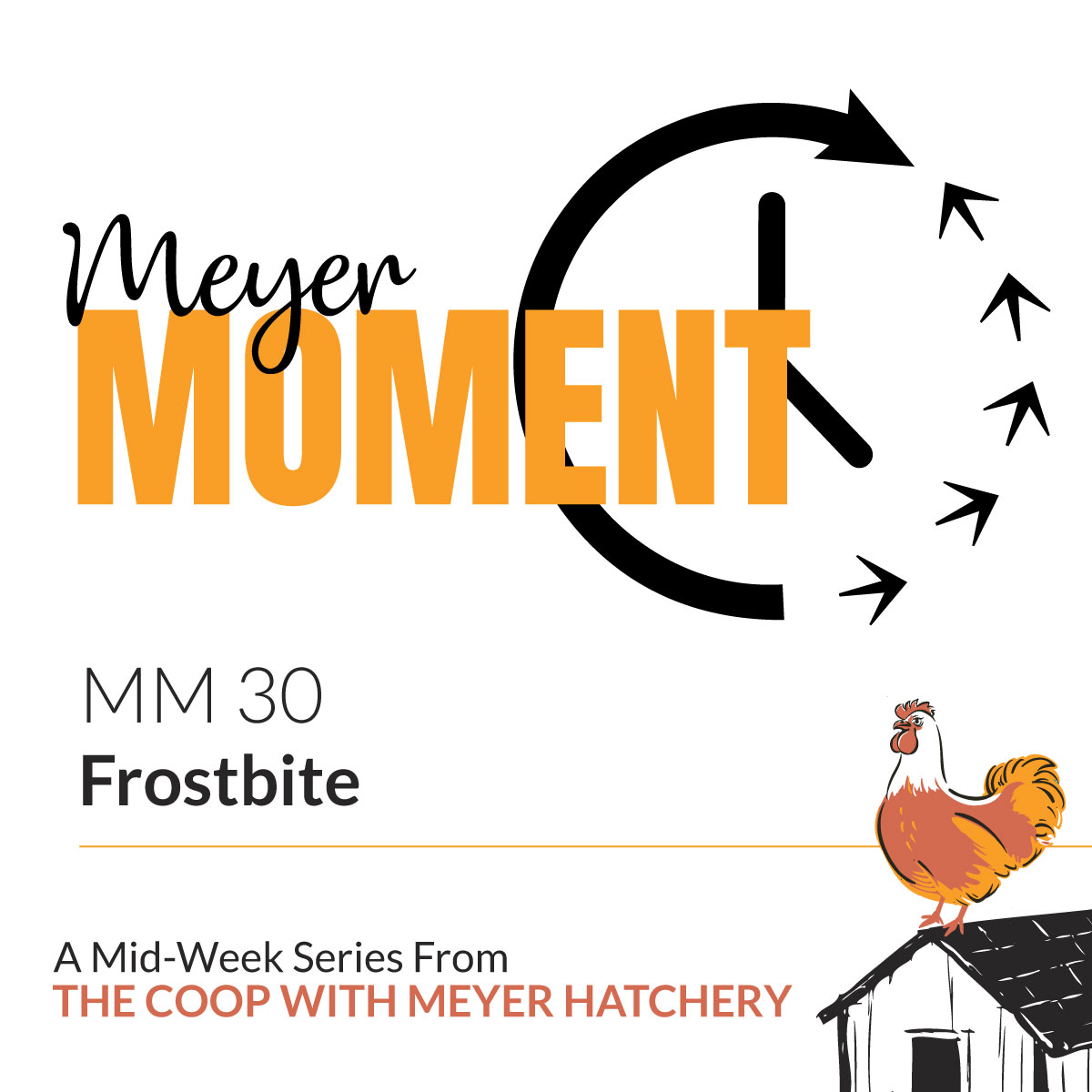 Frostbite on The Coop with Meyer Hatchery