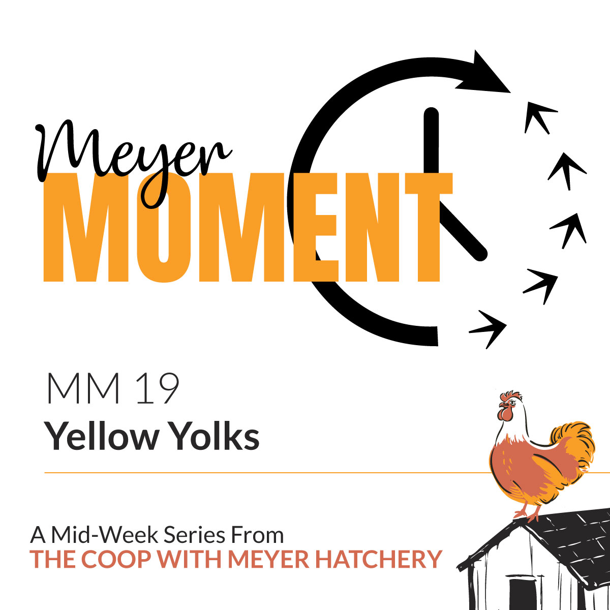 Meyer Moment: Yellow Yolks | The Coop Podcast