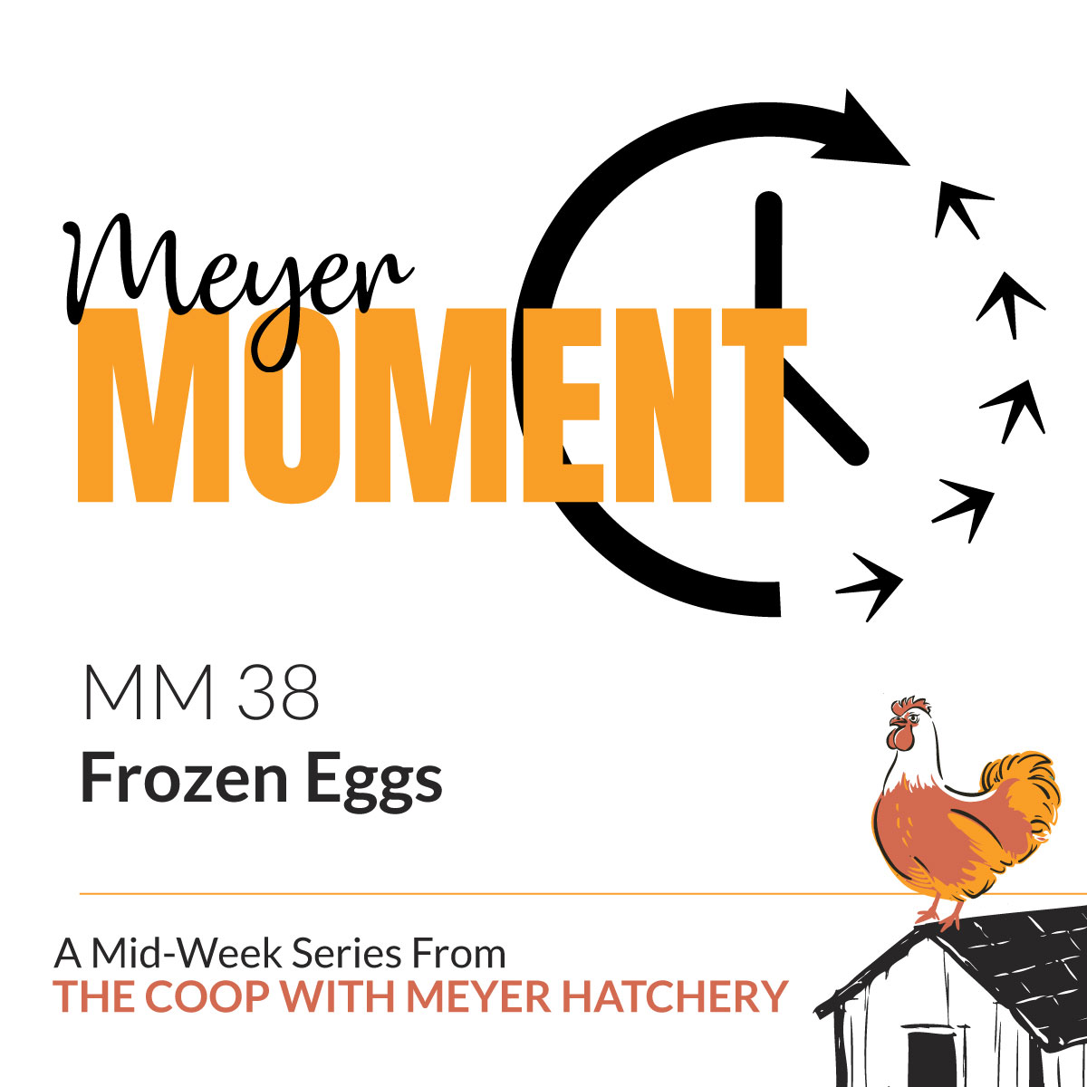 Meyer Moment: Frozen Eggs - The Coop Podcast