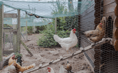 How To Deter Wild Birds From Your Chicken Coop