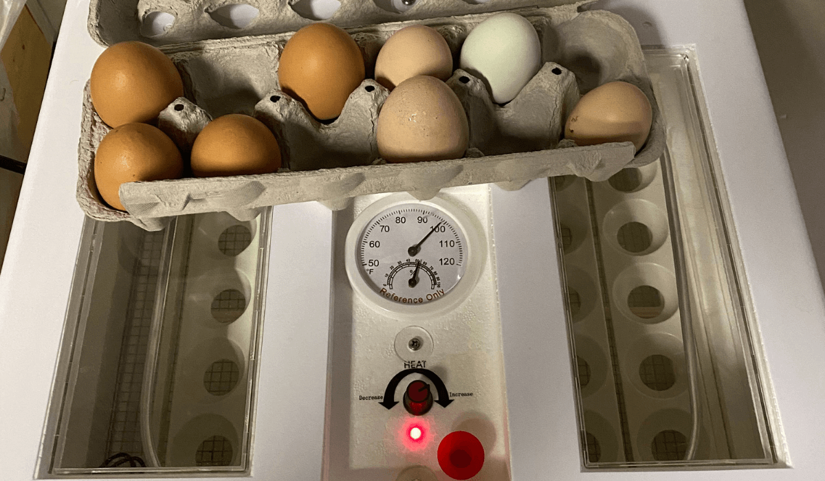 Hatching Egg Failure Cause/Correction Blog