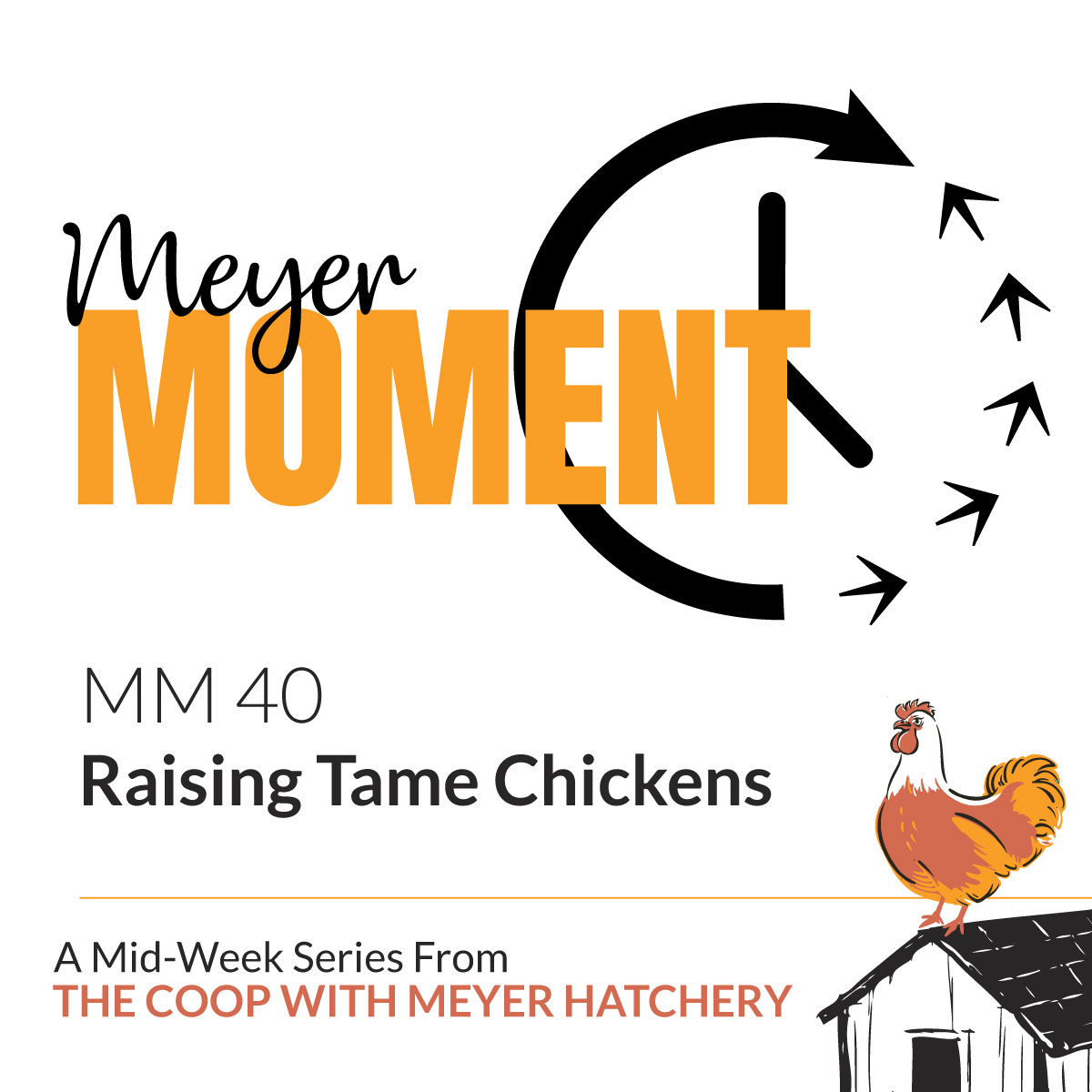 Raising Tame Chickens | The Coop Podcast