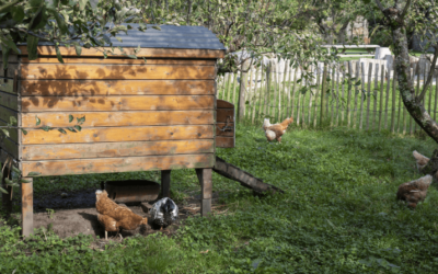 The Difference Between Chicken Coop And Run