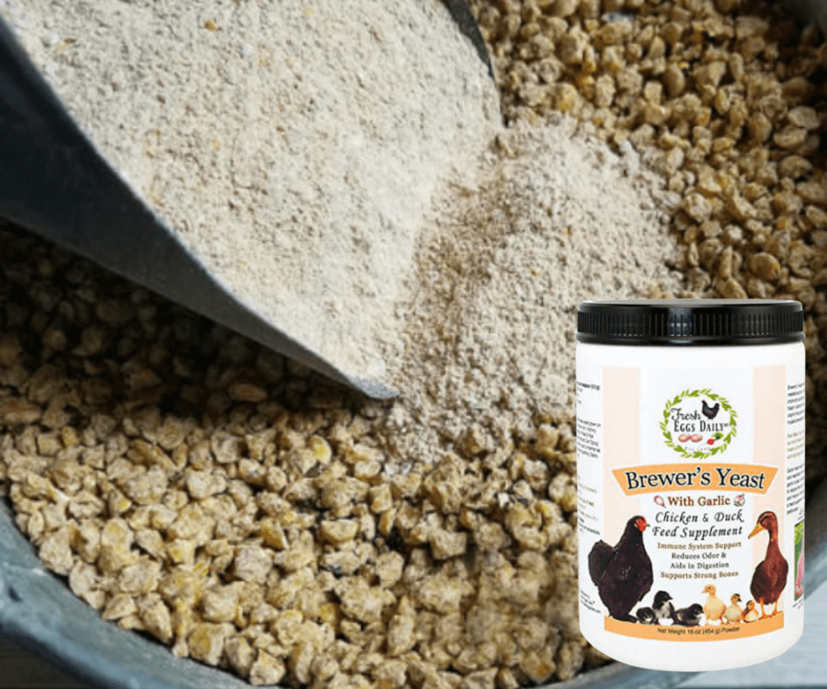 High Protein Treats For Your Flock's Molting Season